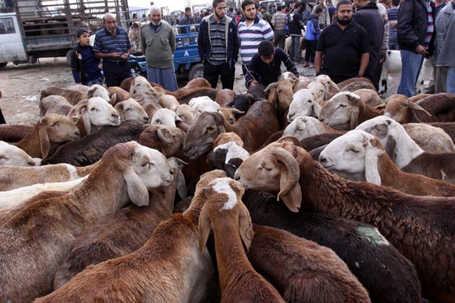 بازار احشام غزه