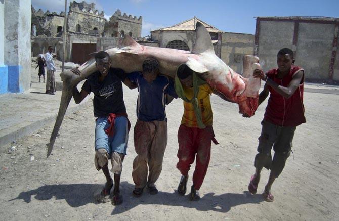 صید یک کوسه ماهی بزرگ