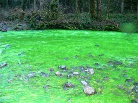 رودخانهای که ناگهان رنگش فسفری شد! + تصاویر دیدنی TAFRIHI.com