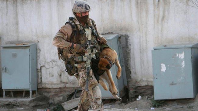 سگ بمب یاب