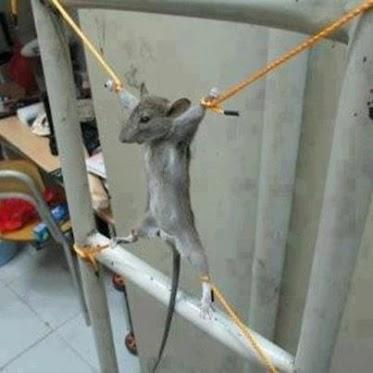 وقتی موش وارد خوابگاه پسران می شود!