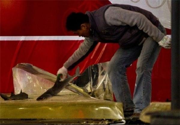تصاویری از شکستن یک آکواریم غول پیکر در چین