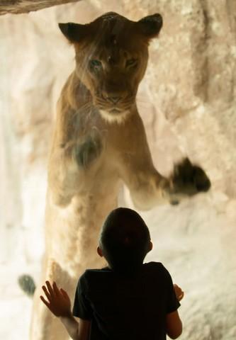 باغ وحش شهر میامی