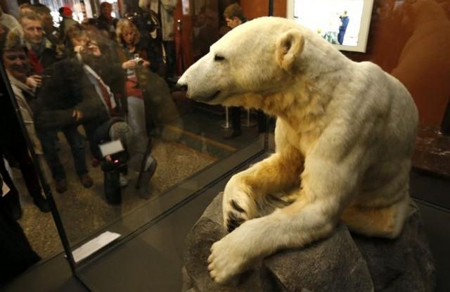 موزه تاریخ طبیعی برلین