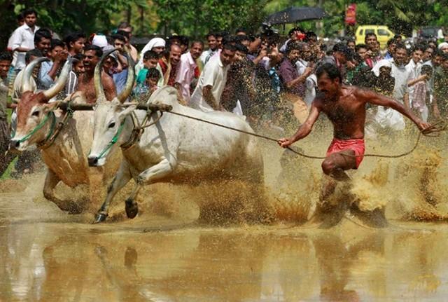 مسابقات گاورانی در هند