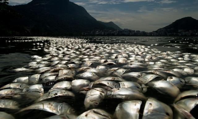 تلف شدن هزاران ماهی
