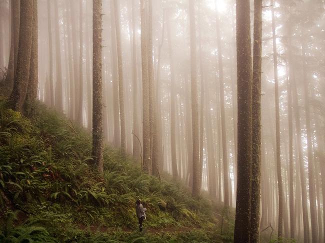 جنگلی در آمریکا