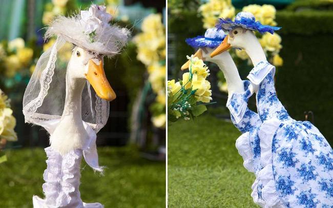 شو لباس اردک ها
