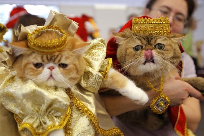گربه های اشرافی