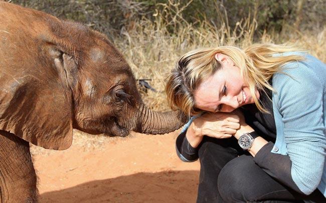 پارک فیل ها