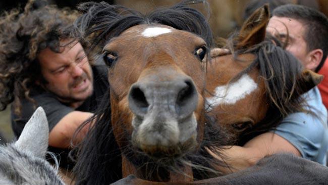 نمایش اسب ها
