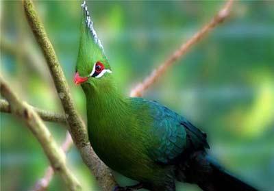 پرنده ای زیبا در افریقا