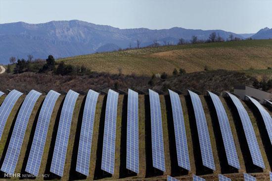 برداشت یونجه در هکتار مزرعه برق خورشیدی در فرانسه (+عکس) – کشاورزی نوین