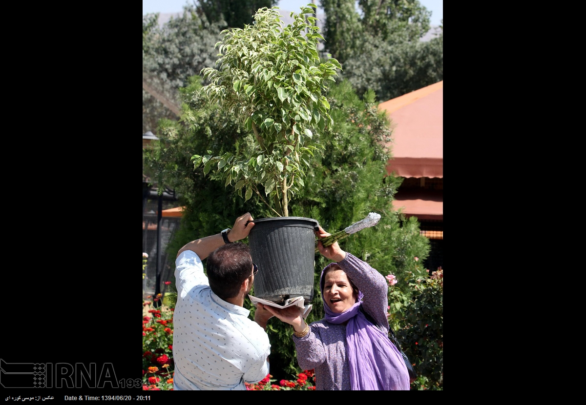 عکس گل ظریف