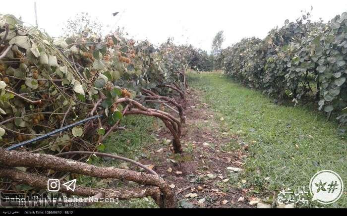 گروه قائمشهر تلگرام خسارات توفان در مناطق مختلف مازندران (عکس)