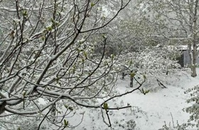 موج سرما  استان فارس را فرا می گیرد