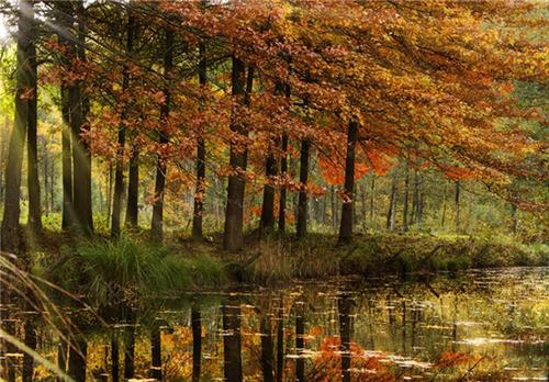 جنگل آردن، بلژیک