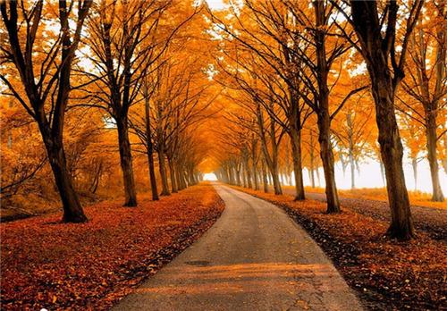 مسیری پاییزی