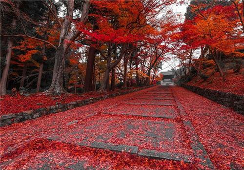 یکی از مسیرهای پاییزی در کیوتو، ژاپن