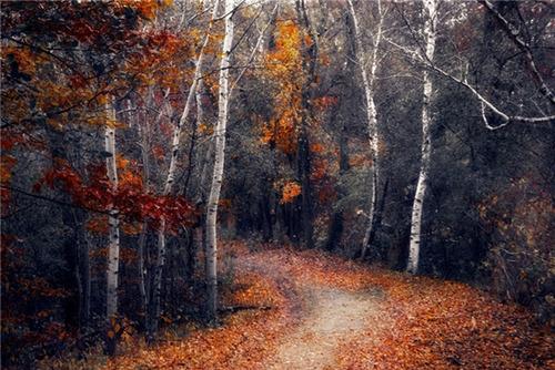 جنگل مینه سوتا، آمریکا