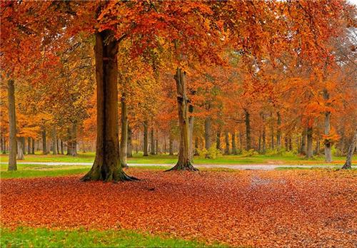 جنگل ونسن، فرانسه