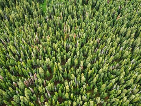 جنگل ملی