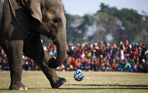 فوتبال فیل ها (نپال)