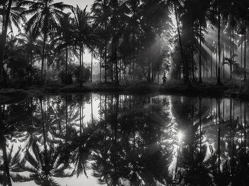 صبحگاه جنگل نیلامبور در کرالا هند