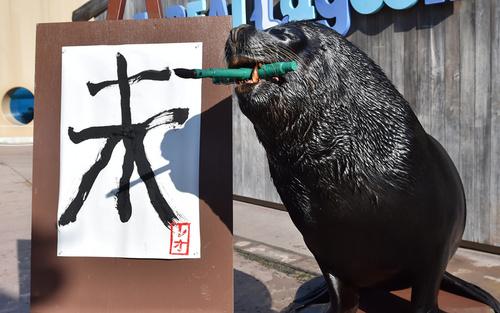 شیر دریایی آکواریوم یوکوهاما ژاپن در حال نگارش