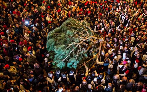 جشنواره کاج در بارسلونا اسپانیا