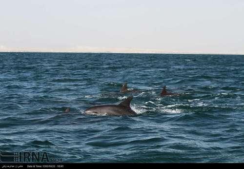 resized 424390 997 گزارش تصویری/ قشم بزرگترین جزیره ایران