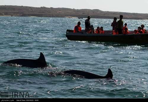 resized 424391 361 گزارش تصویری/ قشم بزرگترین جزیره ایران