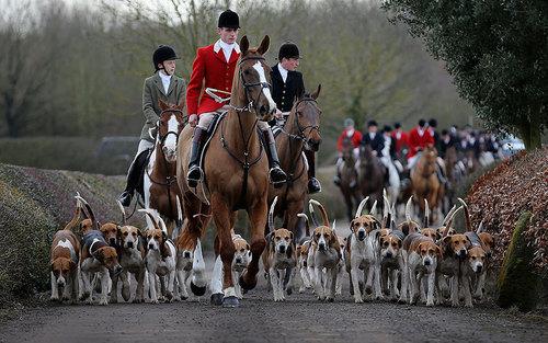 جشن 200 ساله شکار در انگلیس