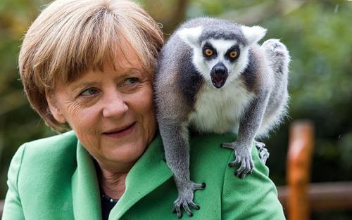 عکس گرفتن صدر اعظم آلمان با یک لامور (میمون پوزه دار) در