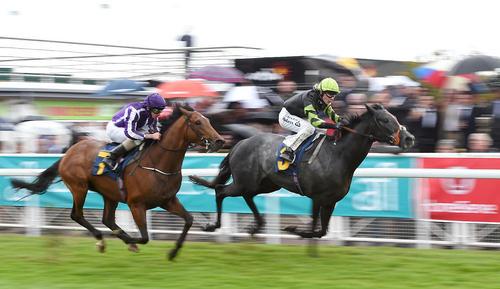 مسابقات اسب سواری در منچستر بریتانیا