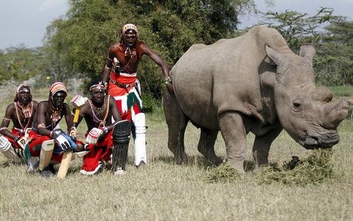 عکس انداختن با آخرین کرگدن نر بازمانده در پارک ملی لایکیپیا در کنیا