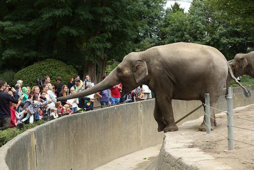 باغ وحش هامبورگ آلمان