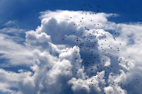 پرندگان مهاجر در حال عبور از آسمان روستایی در مجارستان