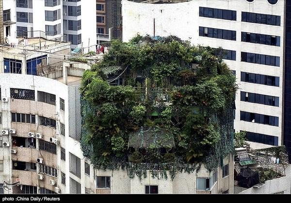 نما ساختمان عکس جالب ساختمان جالب