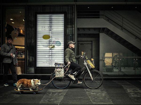دوچرخه سواری به همراه سگ - تایوان