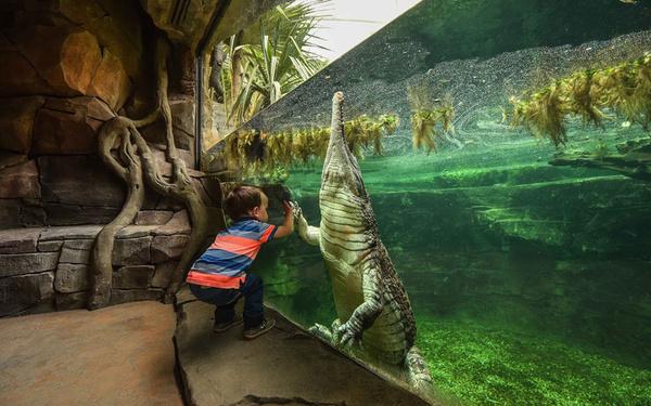 باغ وحش چستر – بریتانیا