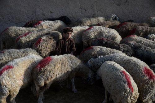 بازار فروش گوسفند برای عید قربان – مزار شریف افغانستان