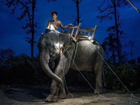 یک فیلبان در یک مرکز تفریحی در میانمار