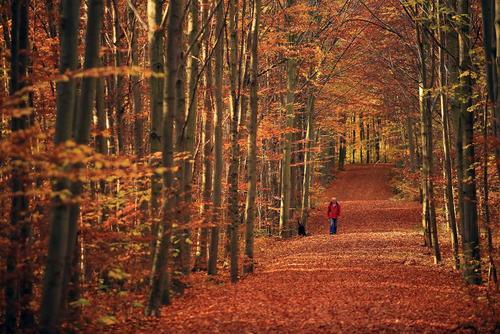 پارکی در آلمان