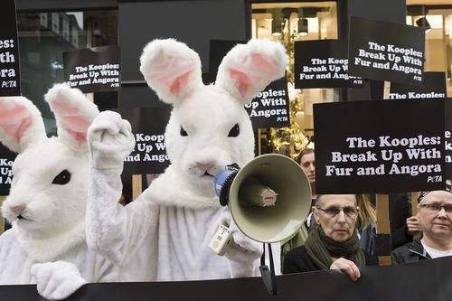 اعتراض فعالان حقوق حیوانات به استفاده از پوست خرگوش در مقابل یک فروشگاه تولید لباس در لندن