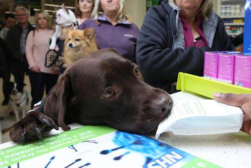 راه اندازی نخستین داروخانه مخصوص سگ ها و حیوانات خانگی در لندن