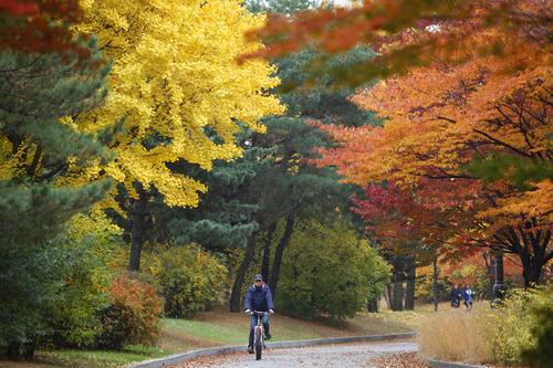 دوچرخه سواری در پارکی در شهر سئول کره جنوبی