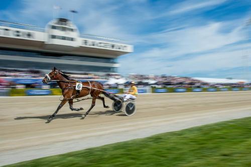 مسابقات کالسکه رانی با اسب در نیوزیلند