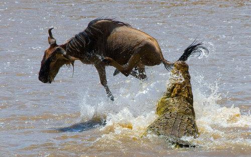 دریاچه پارک ملی ماسای مارا در کنیا