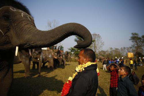 در حاشیه مسابقه فوتبال فیلها در نپال